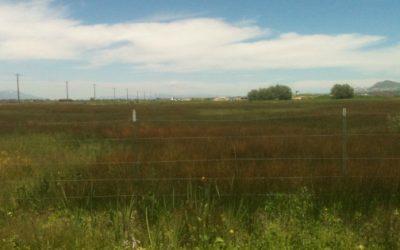Logan City 1800 North Wetland Delineation
