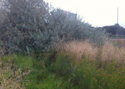 logan city wetland delineation