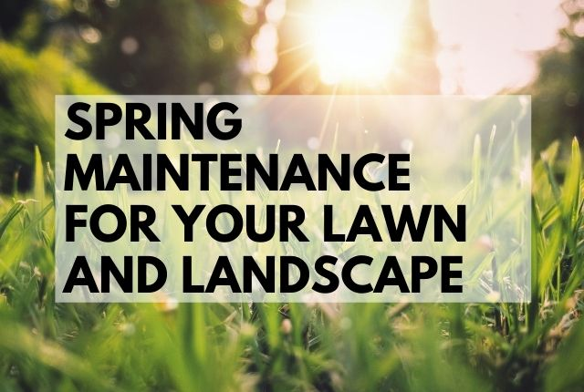 Spring Maintenance for Your Lawn and Landscape